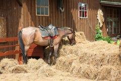 Rotes Pferd isst Heu lizenzfreie stockbilder