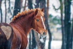 Rotes Pferd mit Herzen Stockfoto
