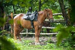 Rotes Pferd Stainding unter Regen Stockfotos