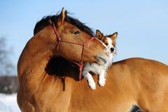 Rotes Pferd und Hund sind Freunde Stockbilder