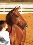 Rotes Pferd und sein Mitfahrer Stockfotografie