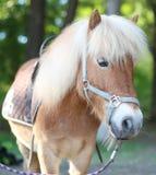 Rotes Pony vorgespannt Stockfoto