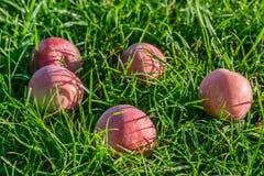 Rotes reifes Apple im Gras Stockfoto