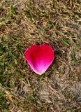 Rotes rosafarbenes Blumenblatt Stockfotografie