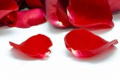 Rotes rosafarbenes Blumenblatt auf weißem Hintergrund Lizenzfreie Stockfotografie