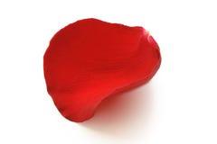 Rotes Rosen-Blumenblatt Stockfotos