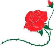Rotes roza lizenzfreie abbildung