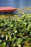 Rotes See-Dock und Lilien Lizenzfreies Stockbild