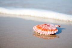Rotes Shell auf dem strandnahen lizenzfreie stockfotos