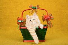 Rotes Tabby Siberian Forest Cat-Kätzchen, das innerhalb des grünen Weihnachtskorbes auf Goldhintergrund sitzt Stockbild