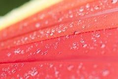 rotes Teil des Regenschirmes stockbild
