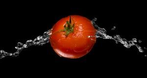 Rotes Tomatespritzenmakro getrennt über Schwarzem Lizenzfreie Stockbilder