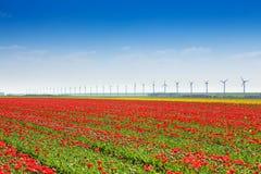 Rotes Tulpenfeld mit Windmühlen auf Himmelhorizont Lizenzfreie Stockbilder