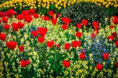 Rotes und gelbes Blumenbeet Stockfotografie