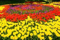 Rotes und gelbes Tulpenfeld Lizenzfreies Stockbild