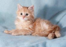 Rotes und weißes Kätzchen, das auf Blau liegt Stockbilder