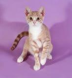 Rotes und weißes Kätzchen, das auf Purpur sitzt Stockbild