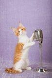 Rotes und weißes Kätzchen, das auf Weinlesefälschungsmikrofon auf Stand hält Stockbild