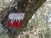 Rotes und weißes Wanderwegzeichen auf Baum, damit Wanderer und Trekking Weg anzeigt Defocussed-Hintergrund stockbild