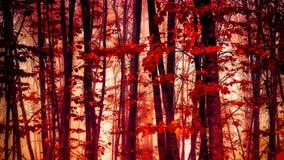 Rotes Walddetail Stockfoto