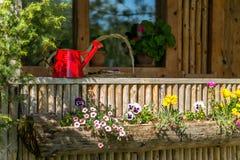 Rotes waterig kann auf einer hölzernen Terrasse mit vielen blühenden Blumen Stockbild