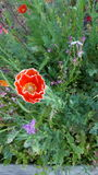 Rotes Weiß des Wildflowergartens Lizenzfreie Stockfotos