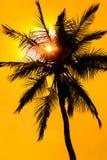 Rotglühensonnenuntergang mit einem Palmeschattenbild Lizenzfreies Stockbild