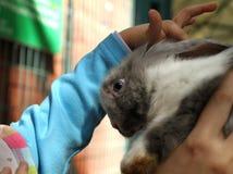 Rothaarige-Kaninchen im Zoo lizenzfreies stockbild