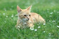 Rothaariges Kätzchen Lizenzfreie Stockfotos