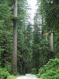 Rotholz-Wald Stockfotografie