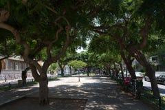 Rothschild blvd in Tel Aviv. A walk in Tel Aviv, Israel Stock Photo
