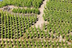 rotie de la France le Rhône de petite ferme d'alpes Photographie stock libre de droits