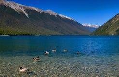 rotoiti озера чисто Стоковые Изображения RF