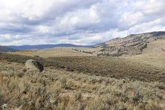 Rotolamento Brushland Immagini Stock