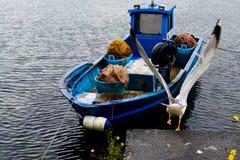Rotolamento del gabbiano di mare Fotografie Stock