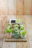 Rotoli di molla freschi con le verdure di stile tailandese Immagine Stock Libera da Diritti