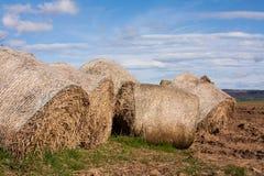 Rotolo dell'erba Fotografia Stock Libera da Diritti