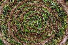 Rotolo dell'erba Fotografia Stock