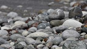 Rotolo delle onde del mare su Pebble Beach archivi video