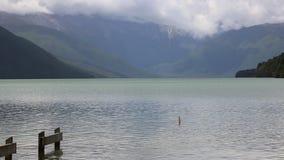 Rotoroa sjö stock video