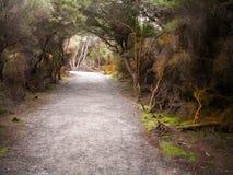 Rotorua manchou árvores Imagem de Stock Royalty Free