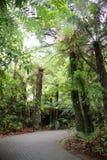 Rotorua, Nieuw Zeeland NZ, 12 April, 2014; Het onderzoeken van het Californische sequoiabos bij de Regenbooglentes, Rotorua royalty-vrije stock fotografie