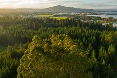 Rotorua Nya Zeeland, solnedgång över redwoodträd- och eukalyptusträd royaltyfria bilder