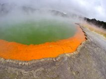 Rotorua sjö Arkivbilder
