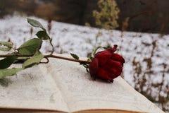 Rotrose auf dem Buch stockfoto