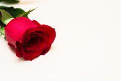Rotrose auf einem hellen hölzernen Hintergrund Tag Women s, Valentinsgrüße Stockfotos
