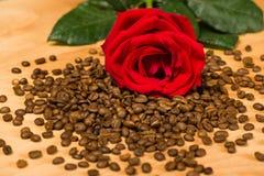 Rotrose auf Kaffeesamen und hölzernem Hintergrund Lizenzfreie Stockfotos