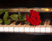 Rotrose auf Klaviertastatur Lizenzfreie Stockfotos