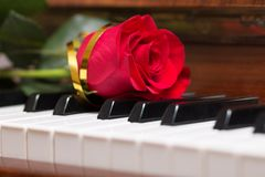 Rotrose auf Klaviertastatur Stockbild