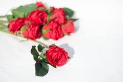 Rotrose auf weißem Boden lizenzfreie stockfotos